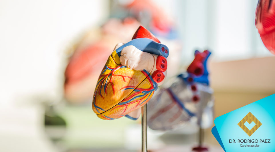 Descoberto método inovador para formar vasos sanguíneos no coração.