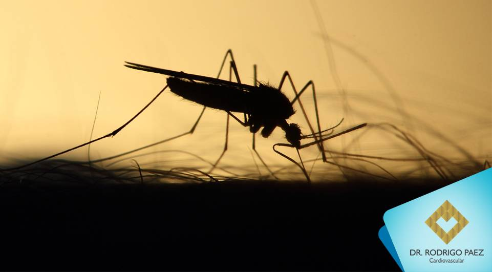 OMS alerta sobre possível surto de febre amarela no Brasil.